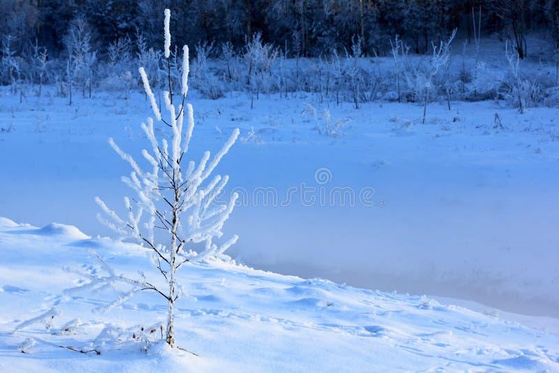 A neve cobriu árvores na floresta imagens de stock royalty free