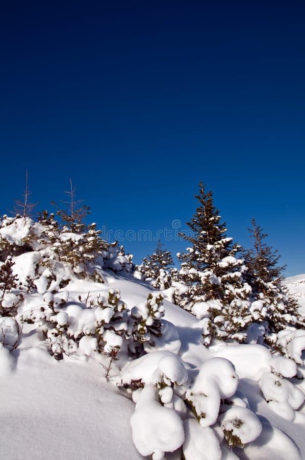 Download A Neve Cobriu árvores Na Montanha Imagem de Stock - Imagem de nave, coniferous: 12807985