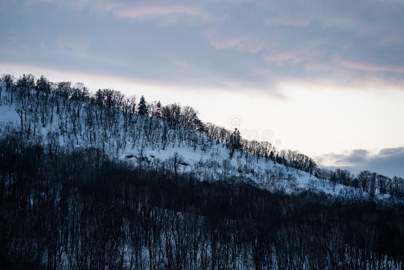 Neve cobriu árvores nas montanhas de neve do inverno Floresta de montanha de neve de inverno fotos de stock royalty free