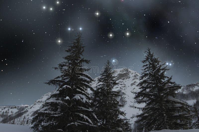 A neve cobriu abetos sob um céu estrelado fotos de stock royalty free