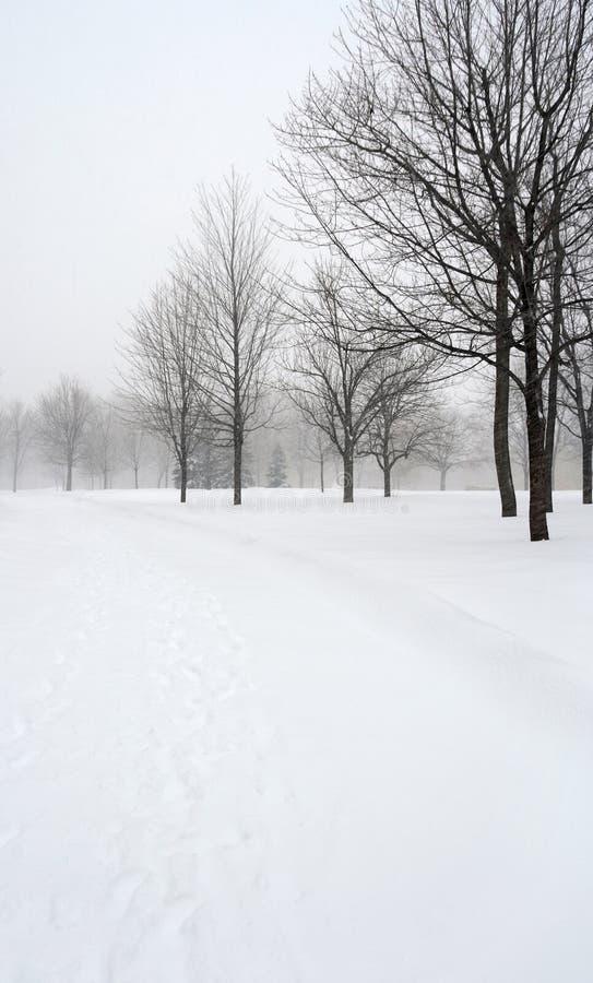 A neve cobriu a aléia em um parque do inverno imagem de stock royalty free