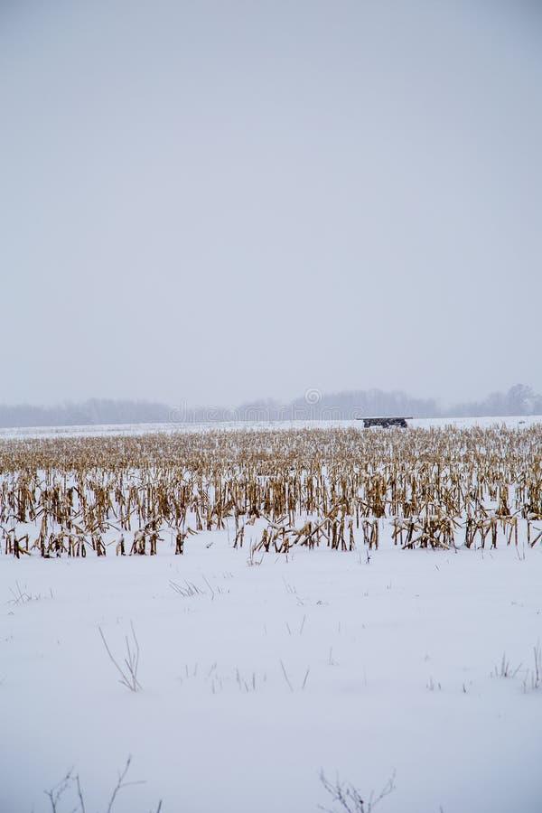 A neve cobriu campos imagem de stock
