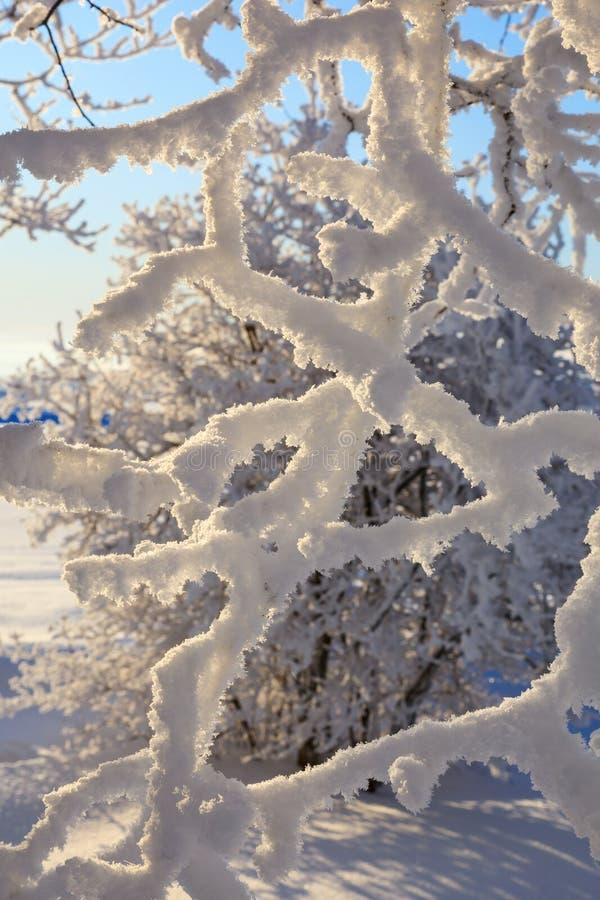 A neve cobriu filiais imagens de stock royalty free