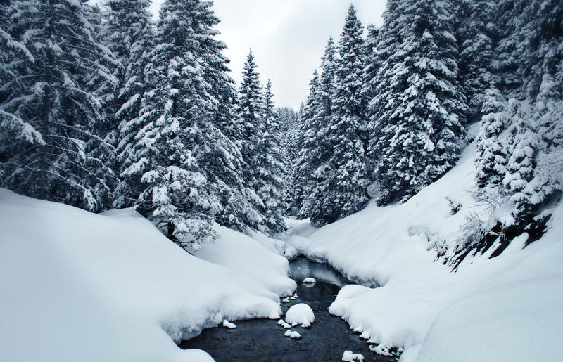 A neve cobriu a floresta do inverno fotos de stock