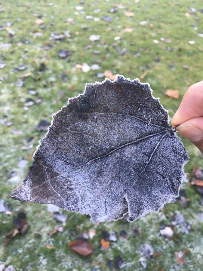 A neve cobriu a folha fotografia de stock