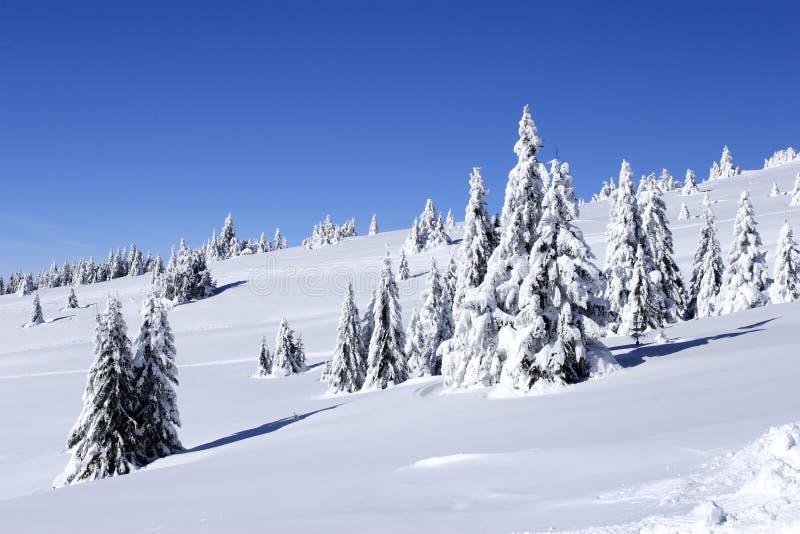 A neve cobriu a montanha e as árvores imagem de stock royalty free