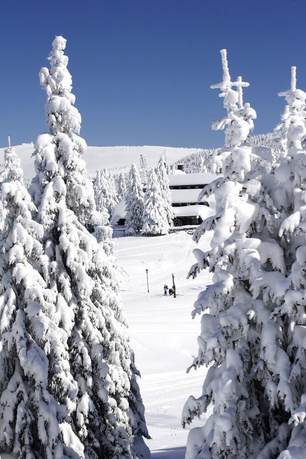 A neve cobriu o chalé do esqui na floresta do pinho foto de stock