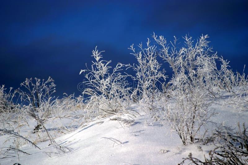 Neve congelada na grama fotografia de stock royalty free