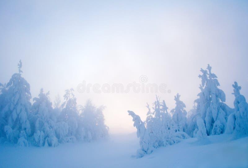Neve crepuscular imagens de stock royalty free