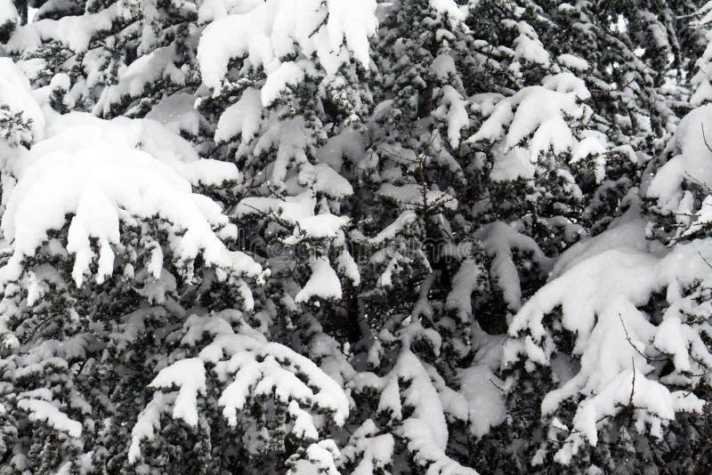 Neve da conversão foto de stock royalty free