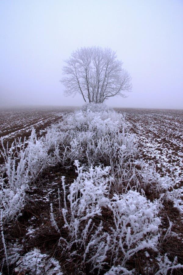 A neve da floresta da neve do inverno encontra-se nos ramos das árvores Tempo nevado gelado Floresta bonita da fantasia da paisag fotografia de stock royalty free