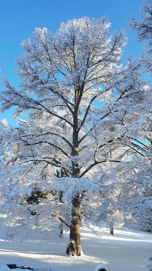 Neve da manhã imagens de stock royalty free