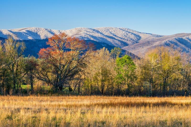 Neve da mola, angra de Cades, Great Smoky Mountains fotos de stock royalty free