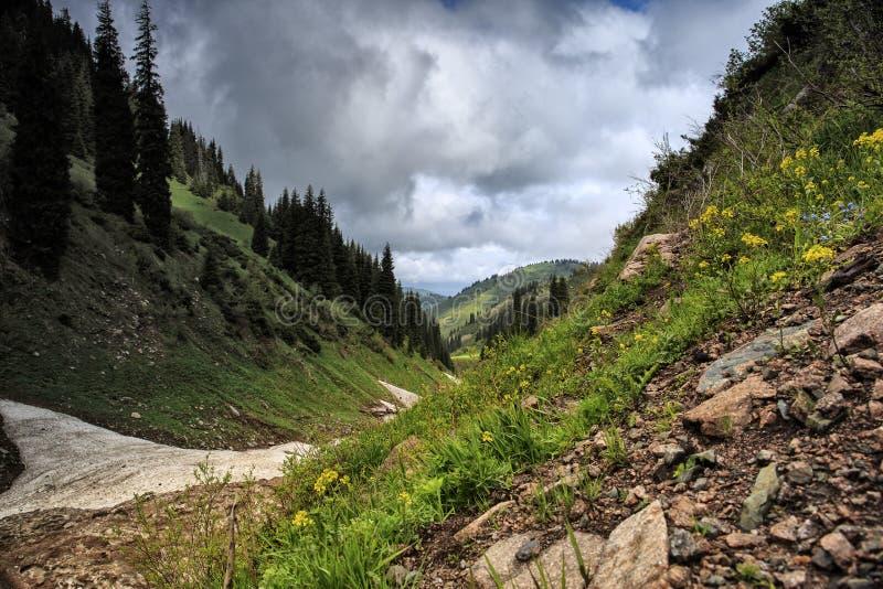 Neve das avalanchas no desfiladeiro foto de stock