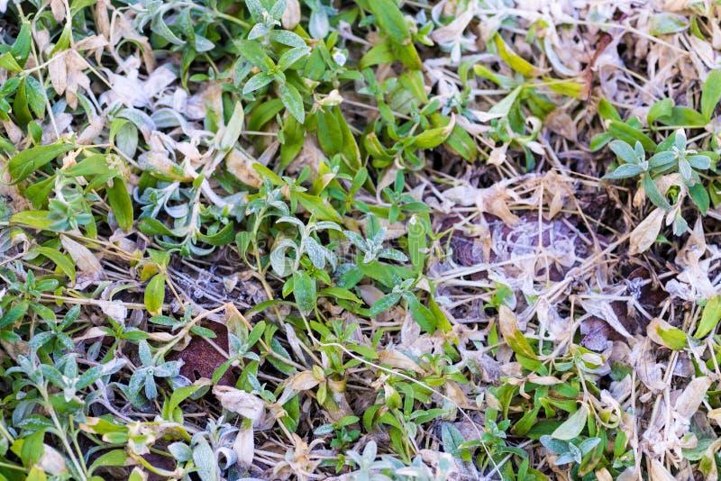 Neve de derretimento no fim da grama verde acima foto de stock royalty free