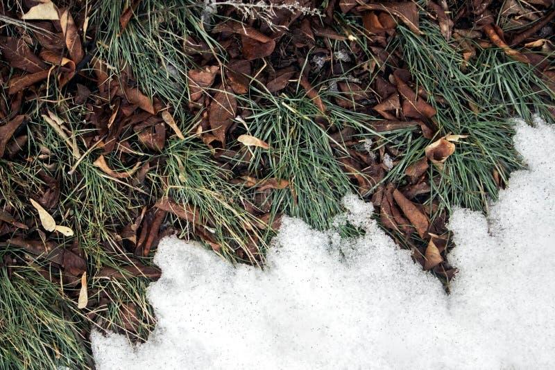 Neve de derretimento no fim da grama verde acima - entre o inverno imagens de stock