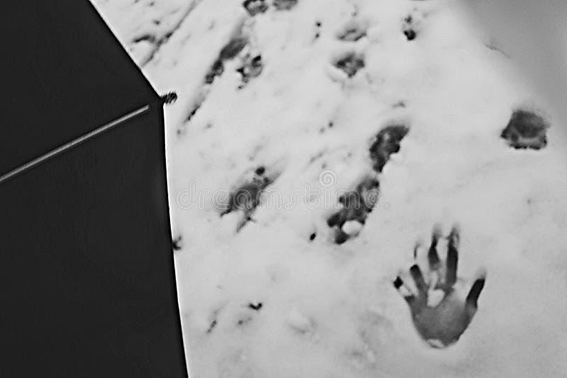 Neve de passeio do whit fotos de stock