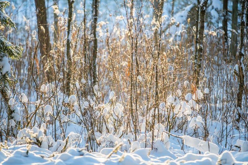 neve del primo piano di inverno sui rami minuscoli fotografie stock libere da diritti