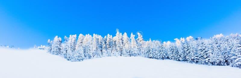 Neve della foresta della montagna del paesaggio di inverno fotografia stock libera da diritti