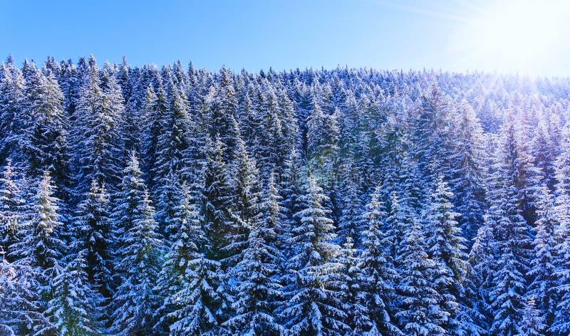 Neve della foresta della montagna del paesaggio di inverno fotografie stock