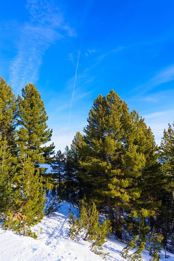 Neve della foresta della montagna del paesaggio di inverno immagini stock