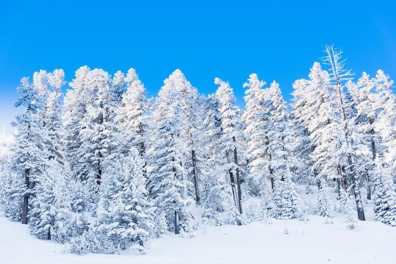 Neve della foresta della montagna del paesaggio di inverno immagine stock libera da diritti