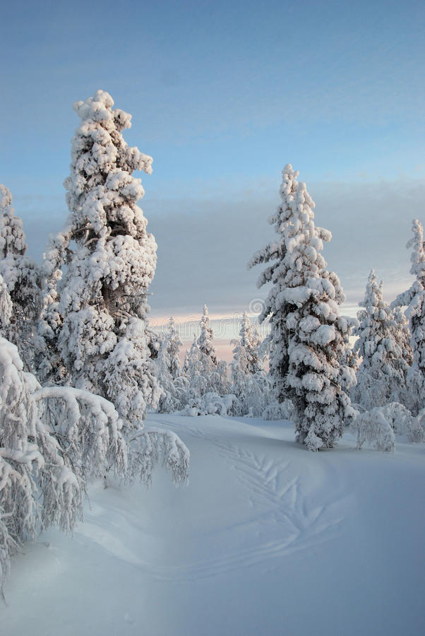 Neve della Lapponia fotografie stock
