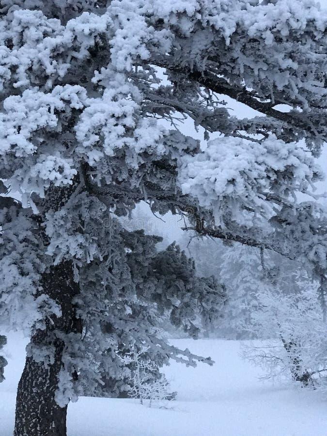 Neve della montagna immagini stock libere da diritti