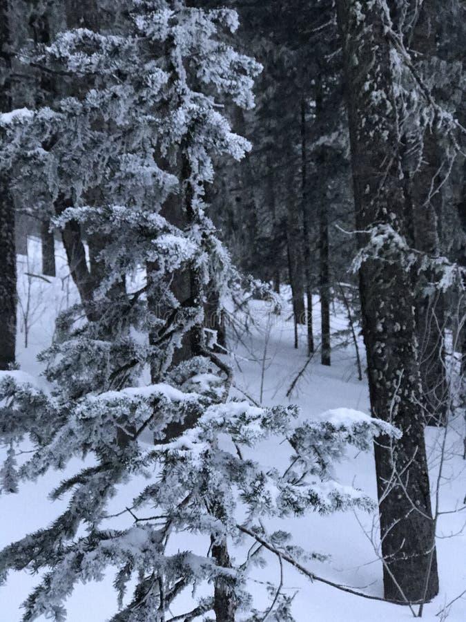 Neve della montagna fotografie stock libere da diritti