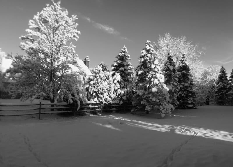 Neve della primavera fotografia stock libera da diritti