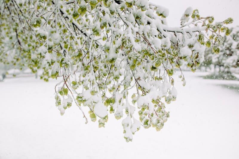 Neve della primavera immagine stock