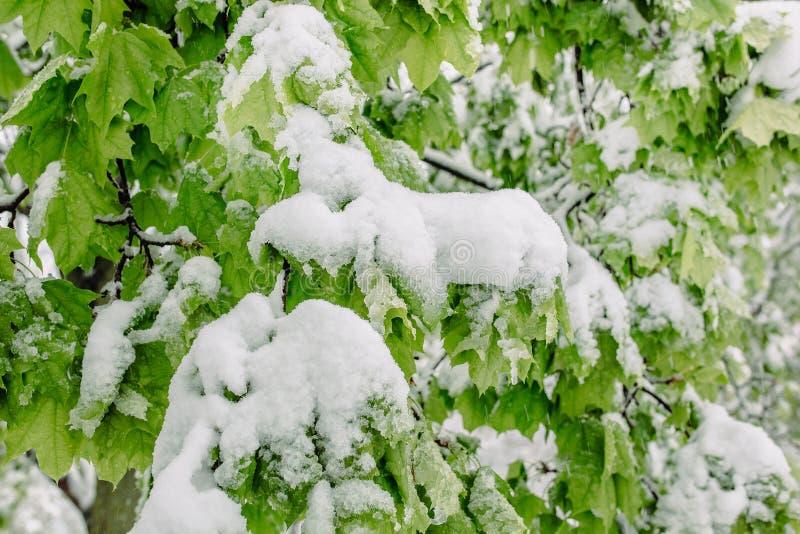 Neve della primavera immagini stock libere da diritti