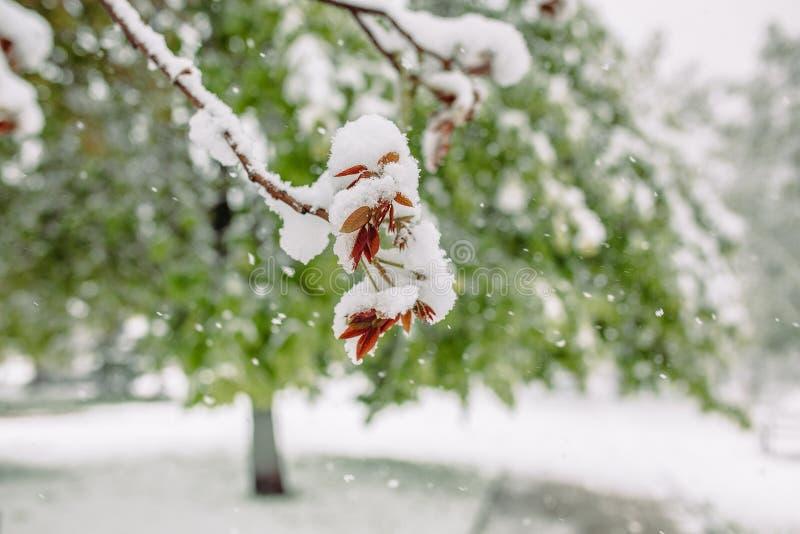 Neve della primavera fotografia stock