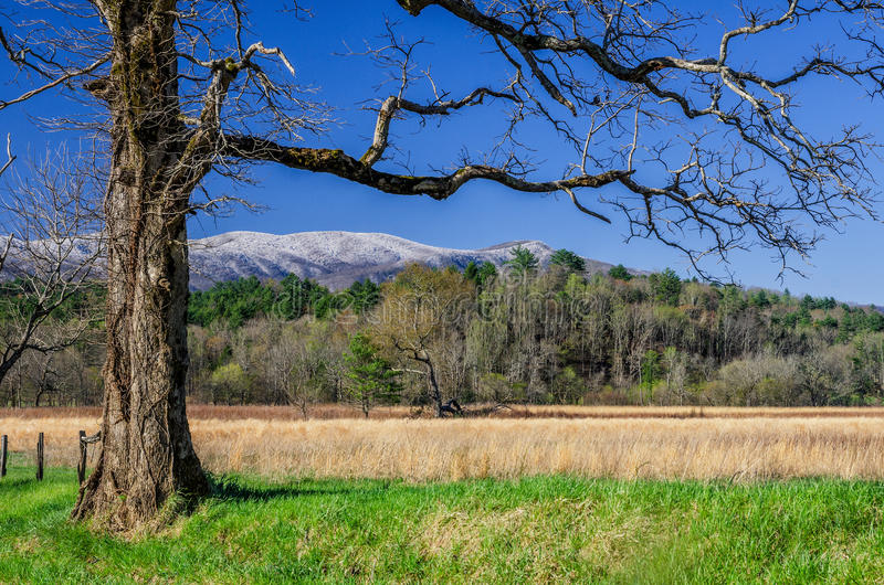 Neve della primavera, baia di Cades, Great Smoky Mountains fotografie stock