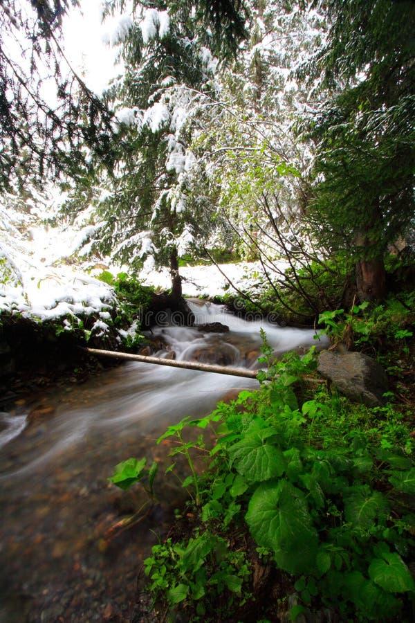Neve della sorgente del flusso della foresta fotografie stock