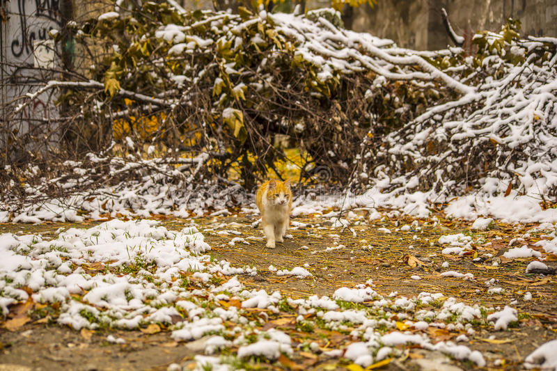 Neve di autunno e gatto dello zenzero fotografia stock