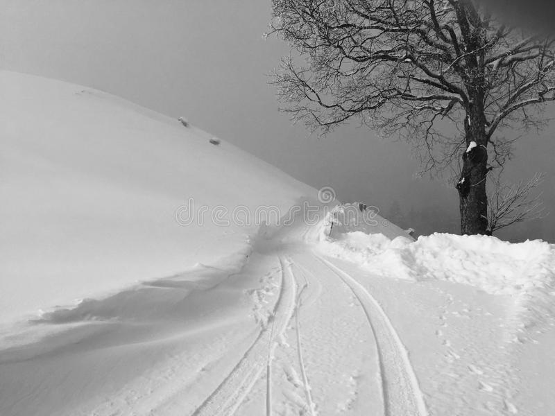 Neve di inverno con l'albero immagini stock libere da diritti