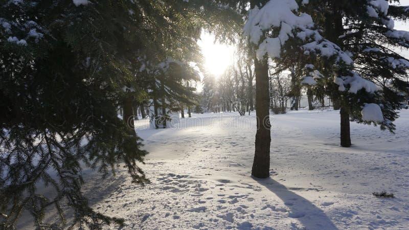 Neve di inverno nel parco di Gorkij fotografia stock libera da diritti