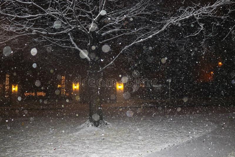 Neve di Nightime nella vicinanza con l'albero rigido di inverno e luci di Natale attraverso la via - bokeh - bianco nero ed oro fotografia stock libera da diritti