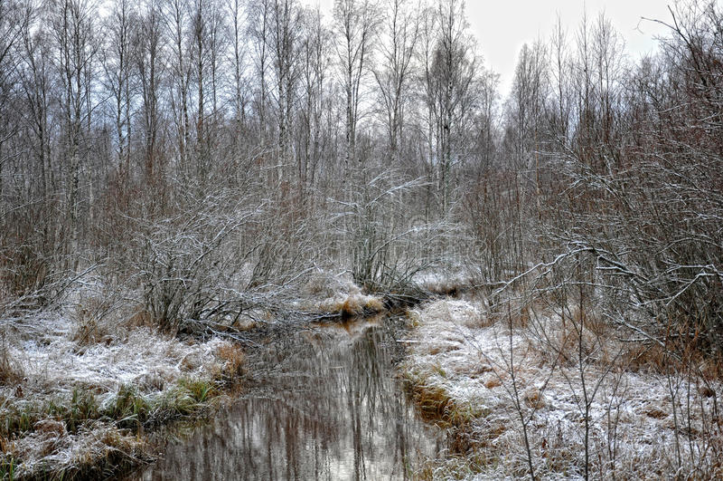 Neve di novembre fotografia stock