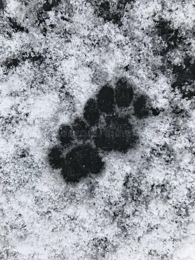 Neve di orme del gatto immagine stock