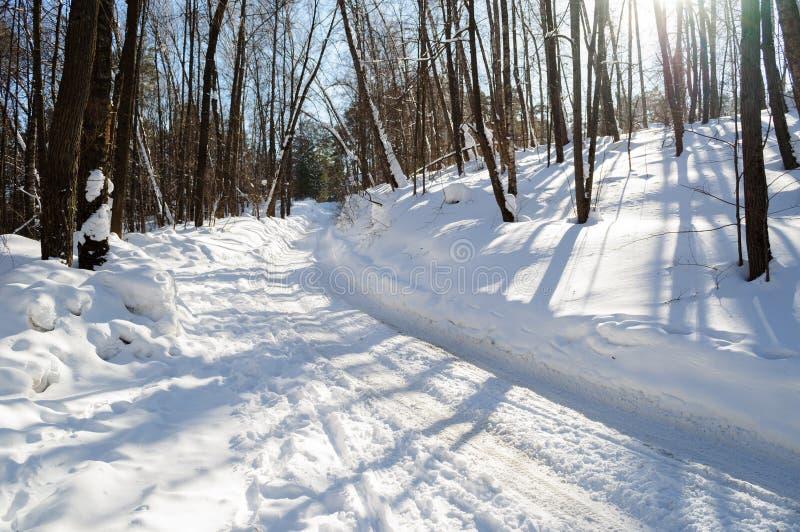 Neve do inverno da estrada de floresta na luz solar imagens de stock