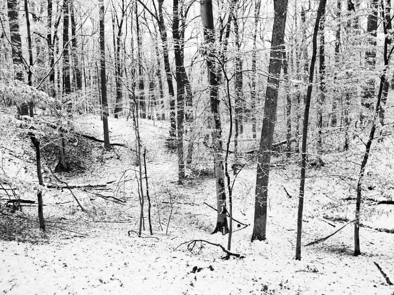 Neve do inverno do parque de vizinhança imagens de stock royalty free