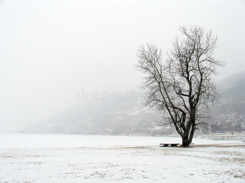 Neve do inverno (Noruega) imagem de stock