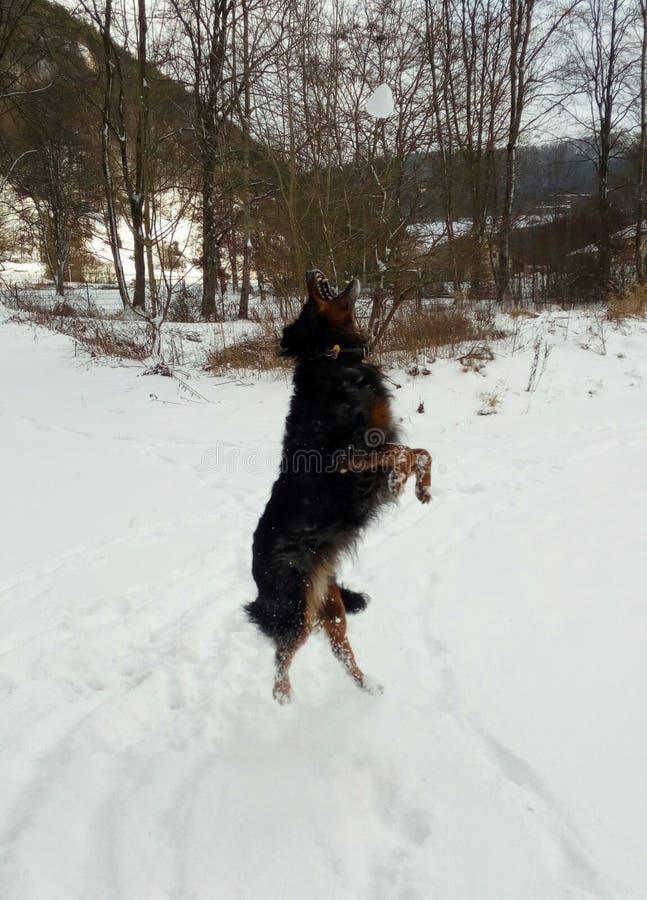 Neve do kreativ do inverno de Hund Schnee foto de stock royalty free