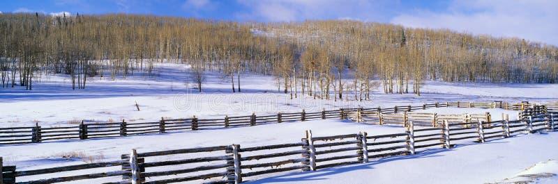 Neve e álamos tremedores do outono, foto de stock royalty free