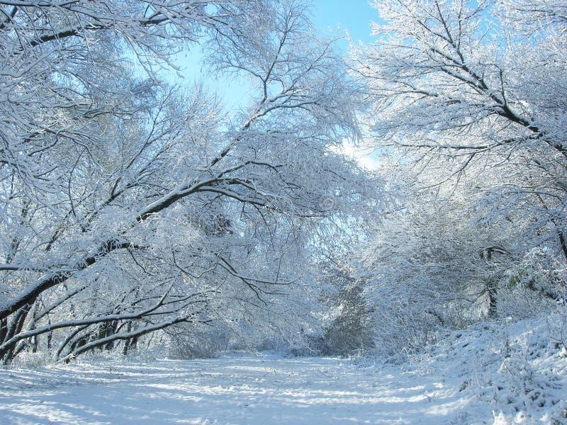 Neve e árvores do inverno. imagem de stock