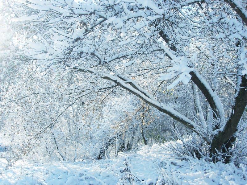 Neve e árvores do inverno. fotografia de stock royalty free