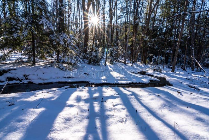 Neve e córrego nas madeiras em uma tarde ensolarada fotografia de stock royalty free