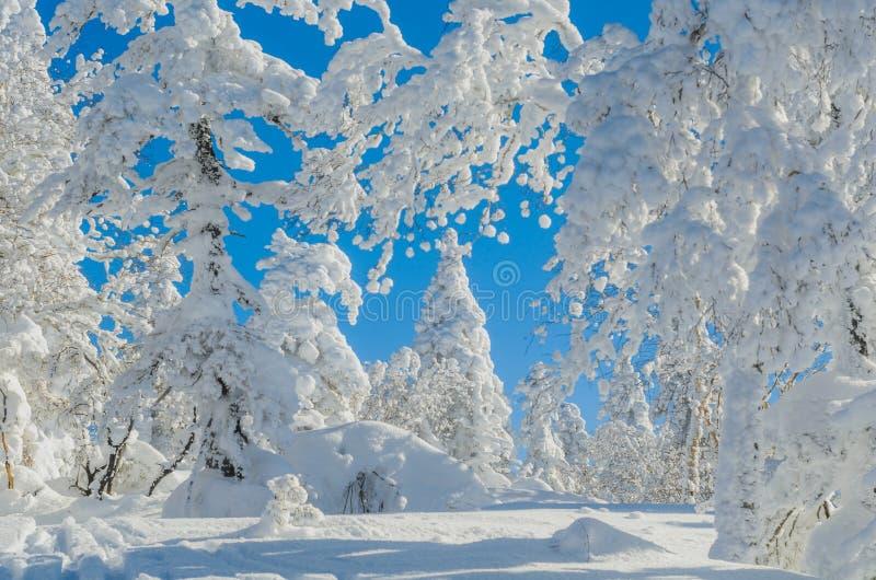 Neve e cielo immagine stock